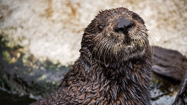 Quiz: Which Sea Otter Are You?