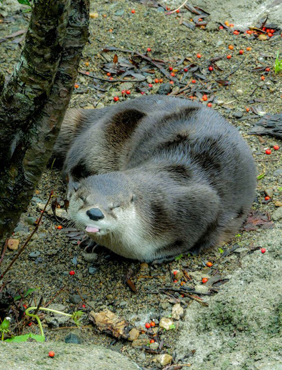 Tell Us What You Really Think, Otter