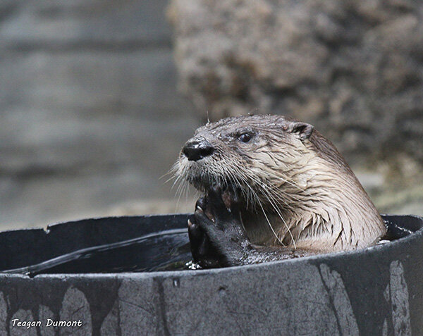 Otter Plots His World Domination in the Bath