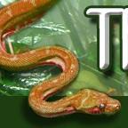 TCJbanner2.jpg