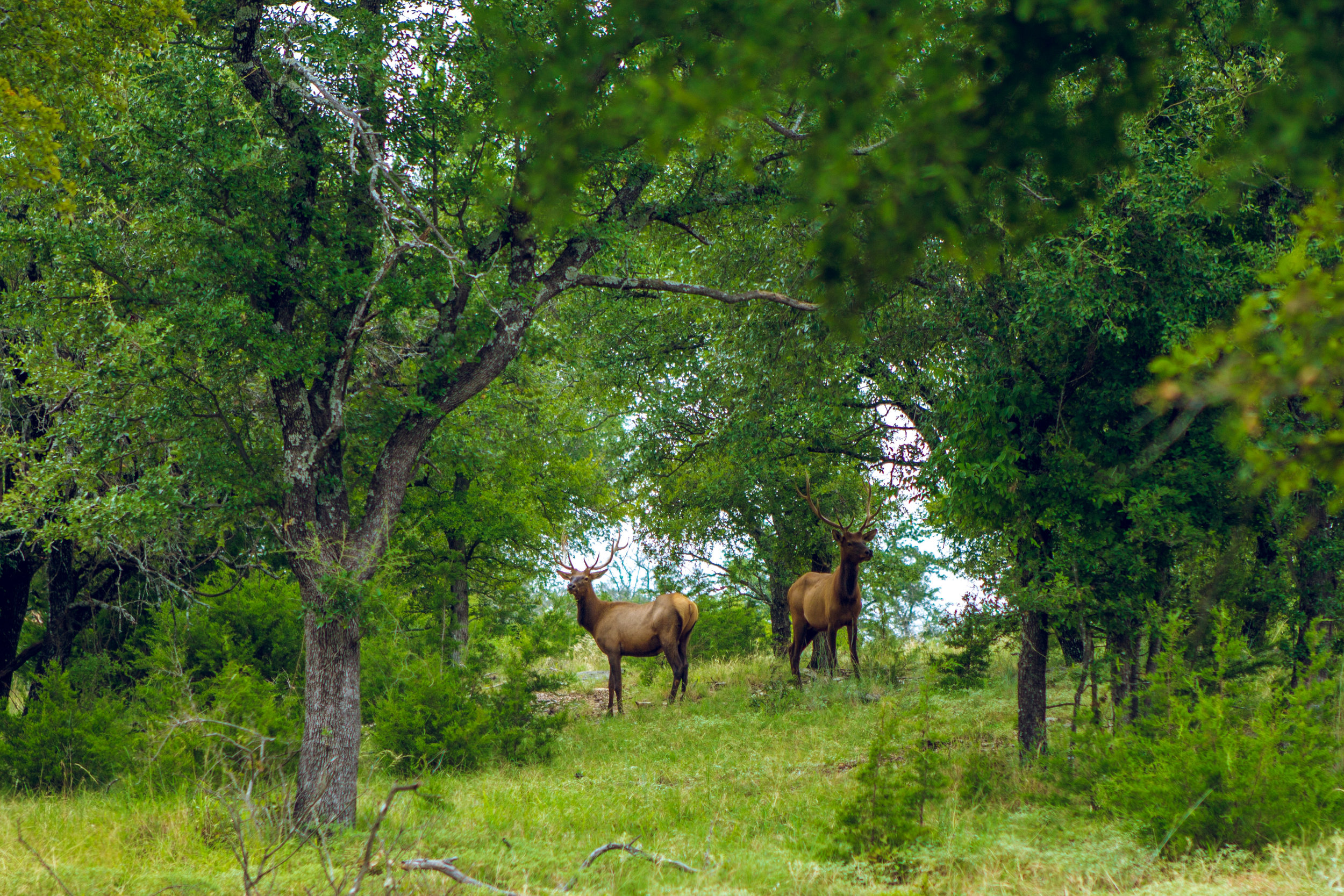 10 xXx Ranch Beef Presentation -113.jpg