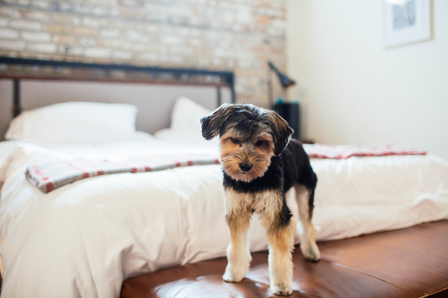 Minneapolis Dog Wedding Photographer