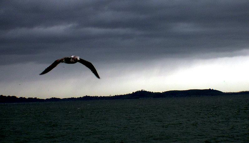 See Seagul