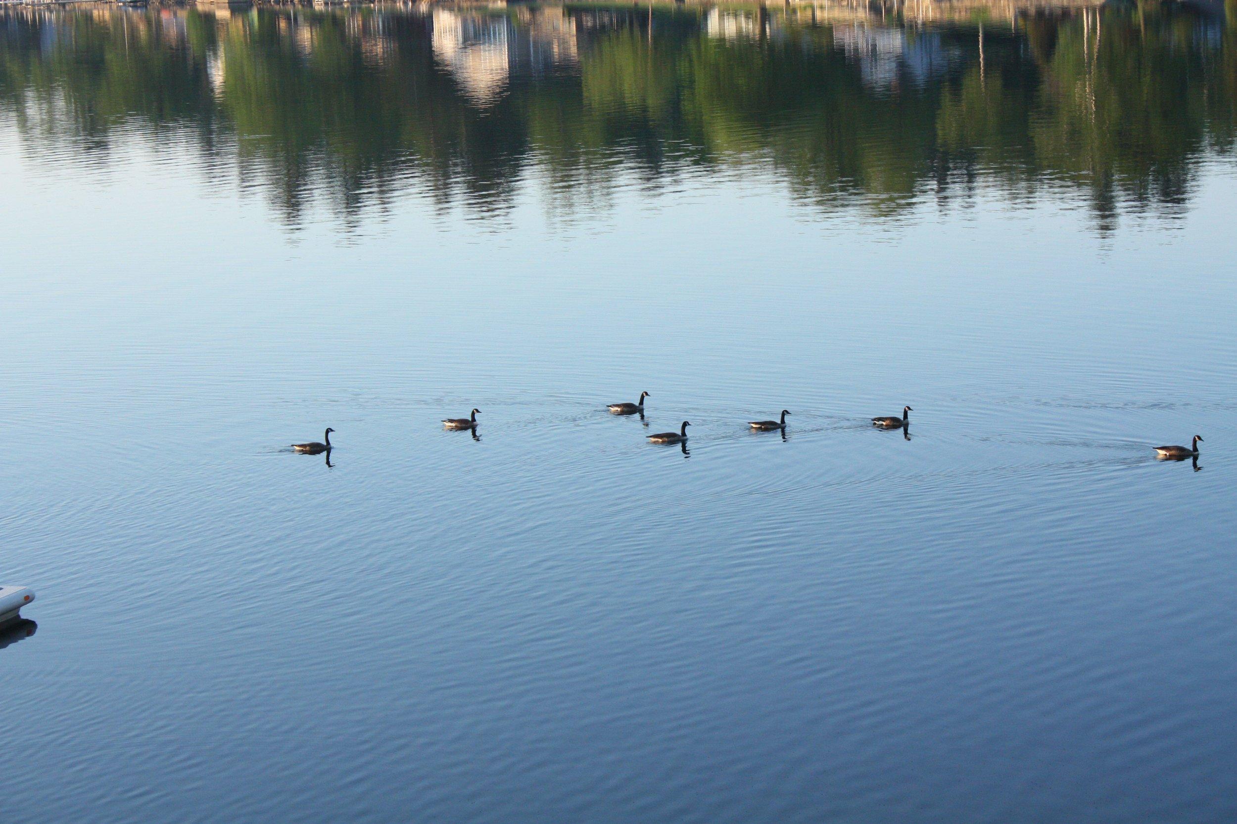 Bantam Lake Wildlife
