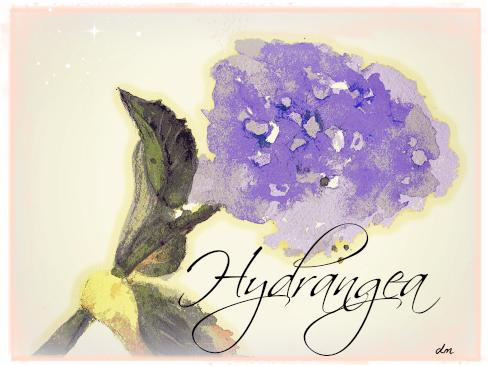hydrangea w:c.jpg