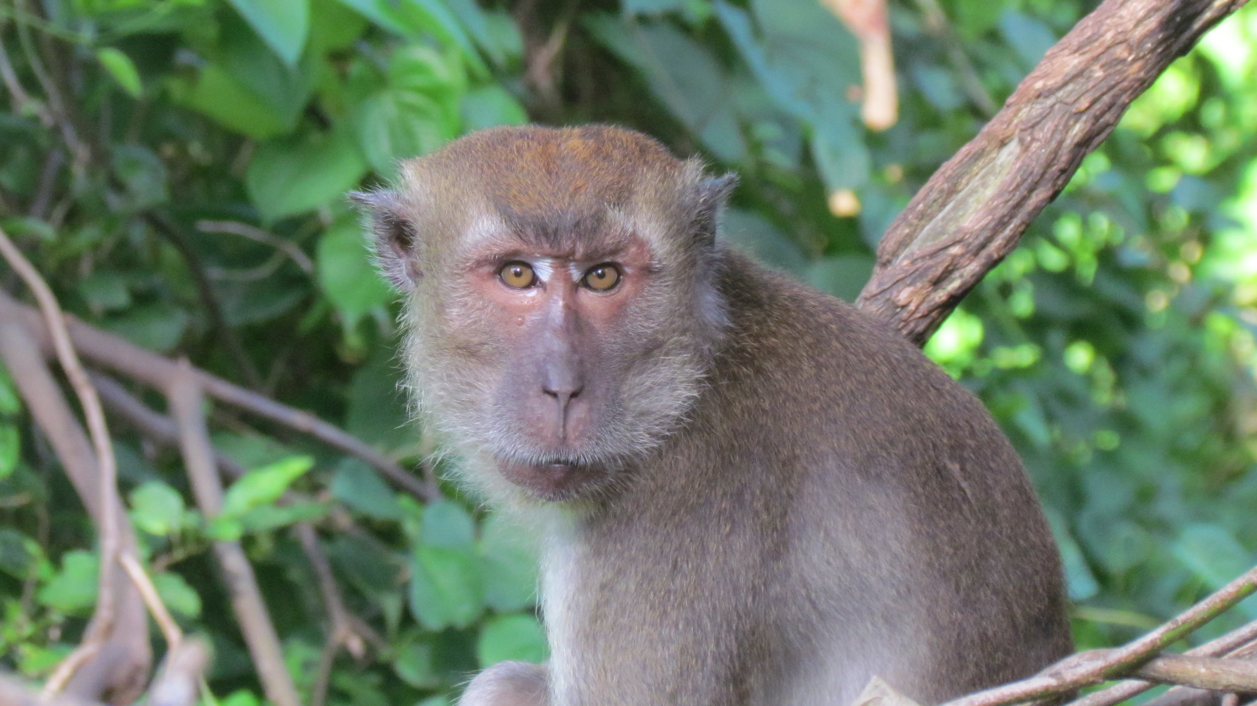 Lifestyle variations in nonhuman primates