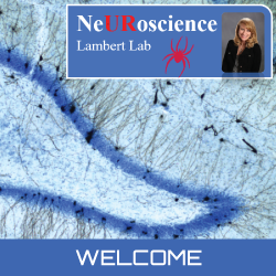 home-page-lambert-behavioral-neuroscience-lab.png