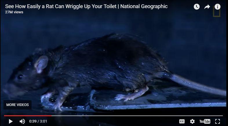 rat-video-screenshot.JPG