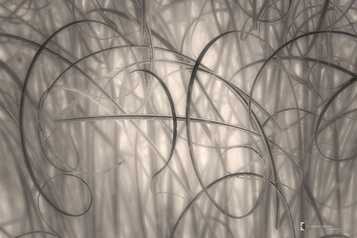 Grasses in Sepia.jpg