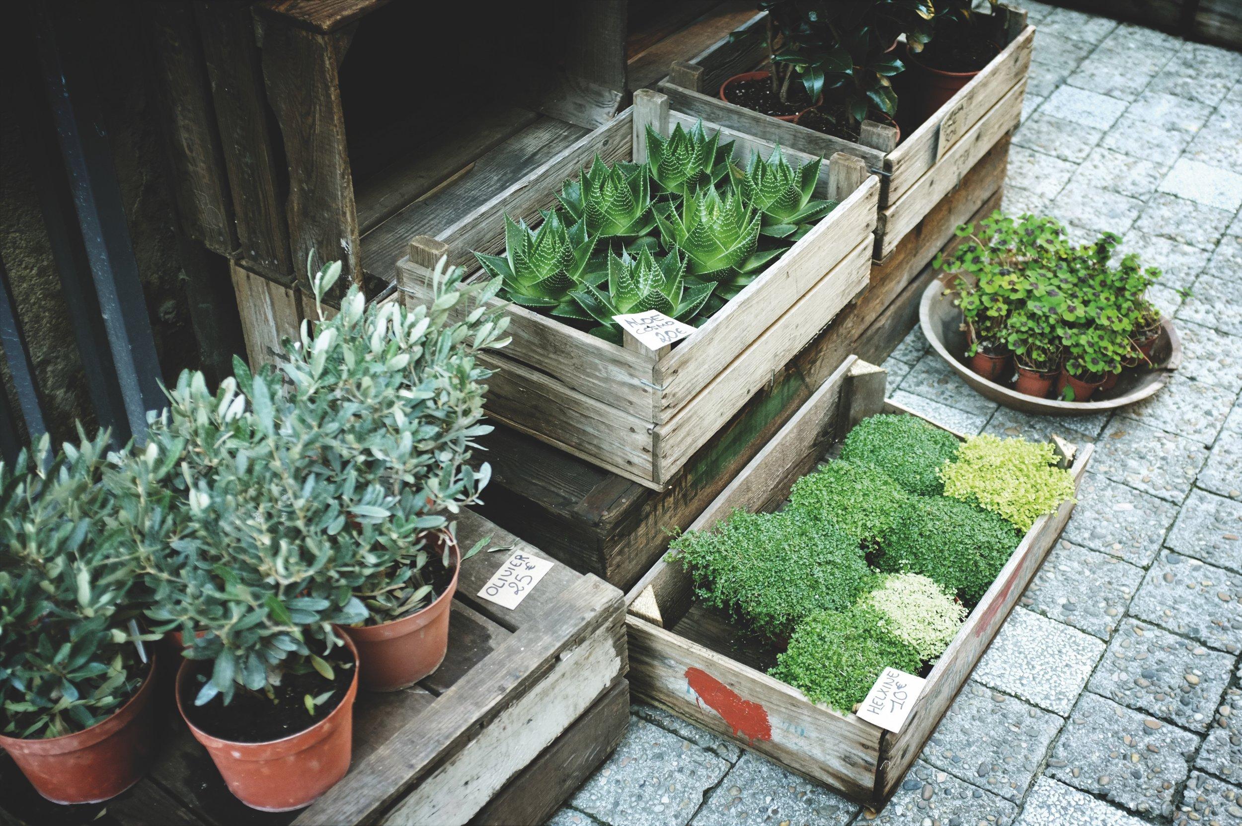 Gardens-feel-better