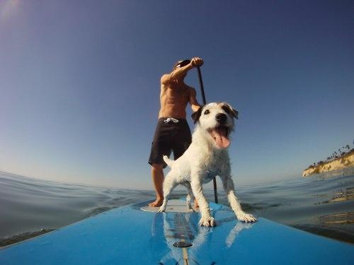 Dog on padleboard.jpg