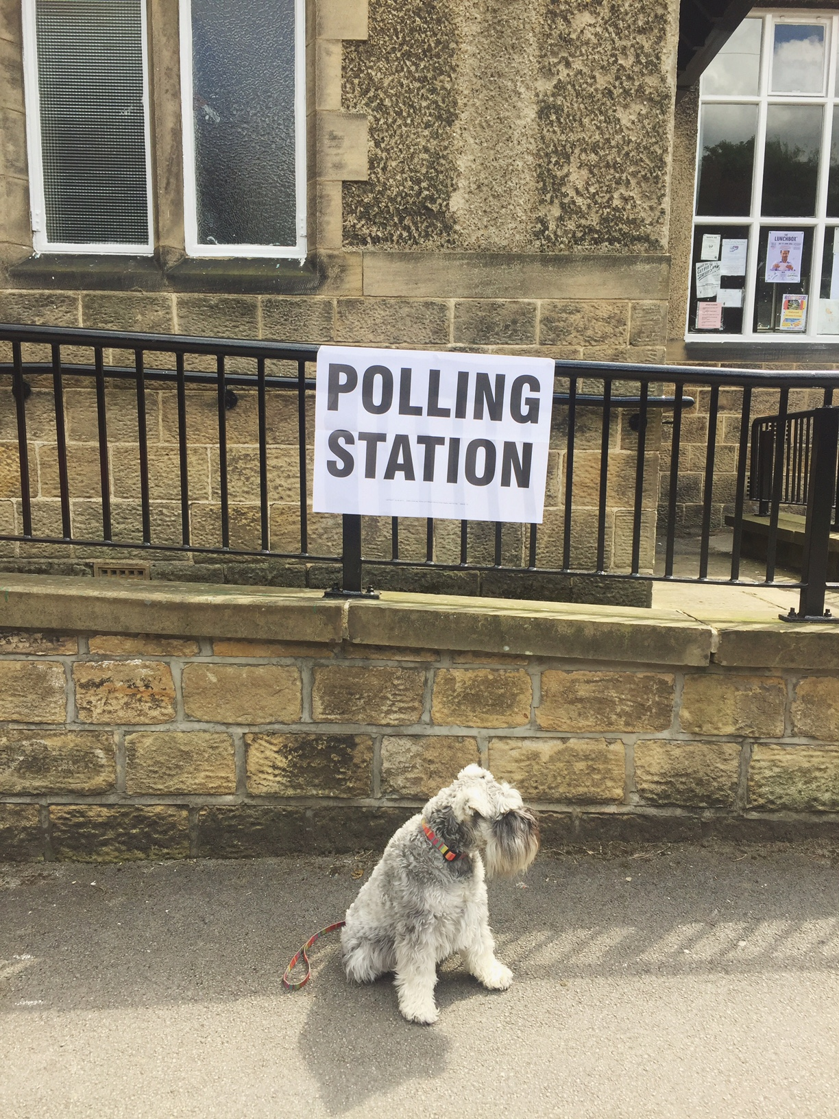 #dogsatpollingstations was my fave thing as always