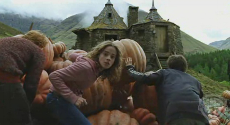 The trio hiding in hagrids pumpkin patch.jpg
