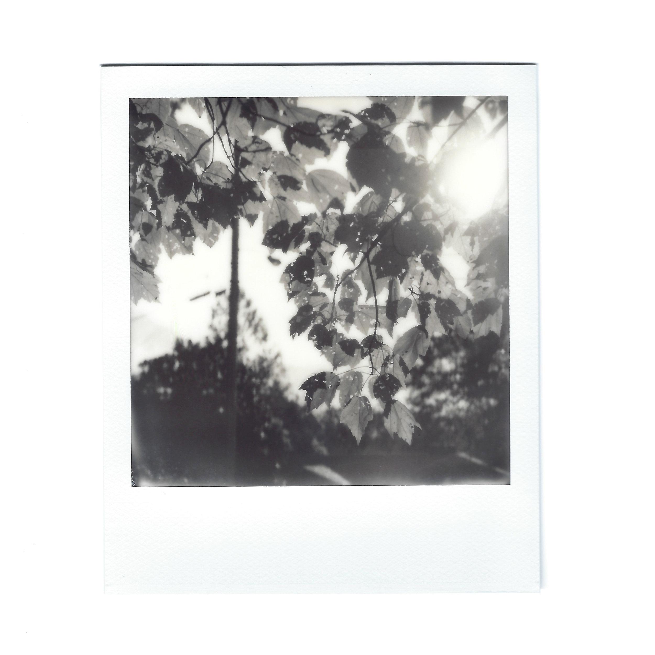 leaves-sunrise-polaroid.jpg