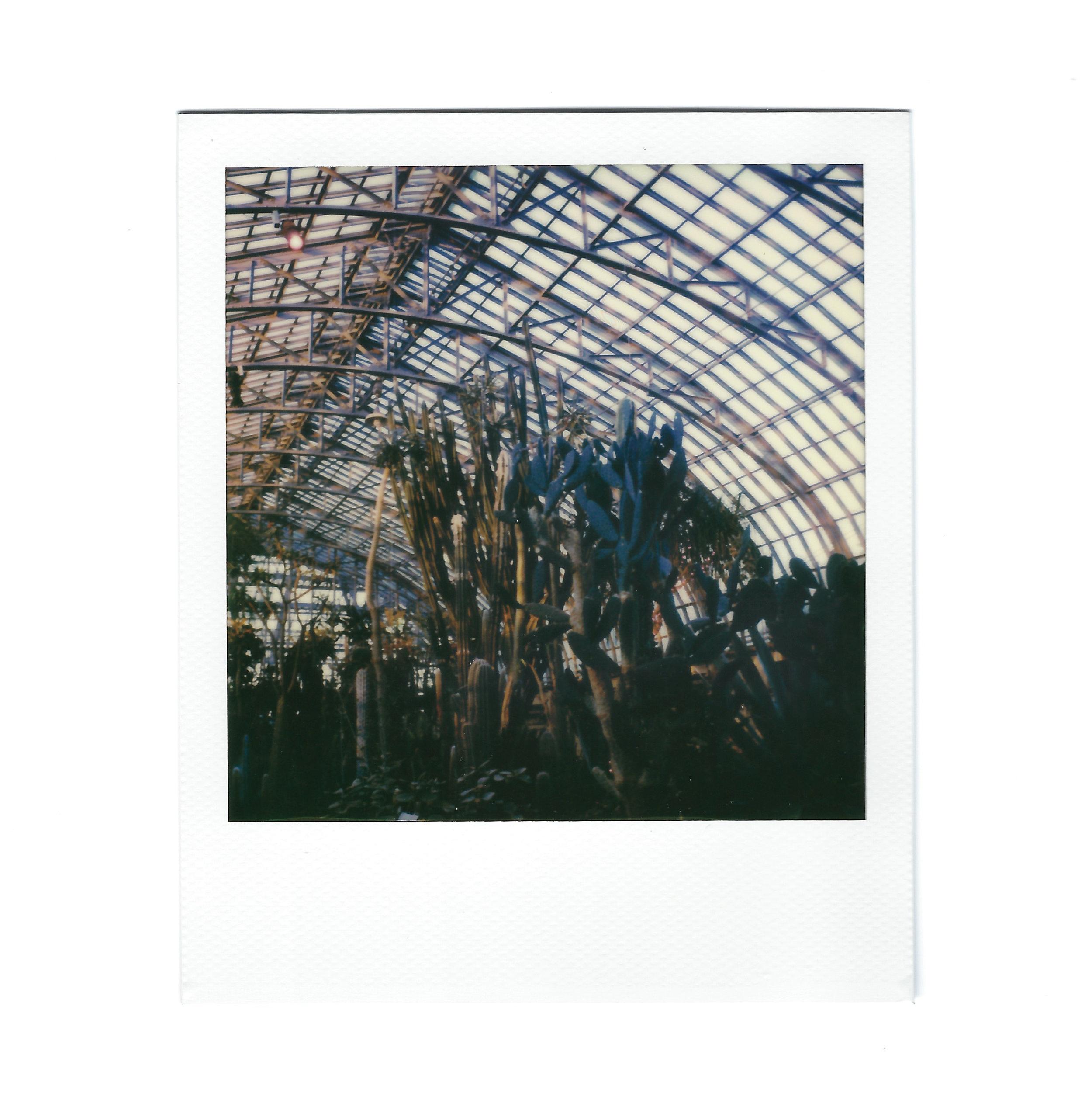 desert-room-polaroid.jpg