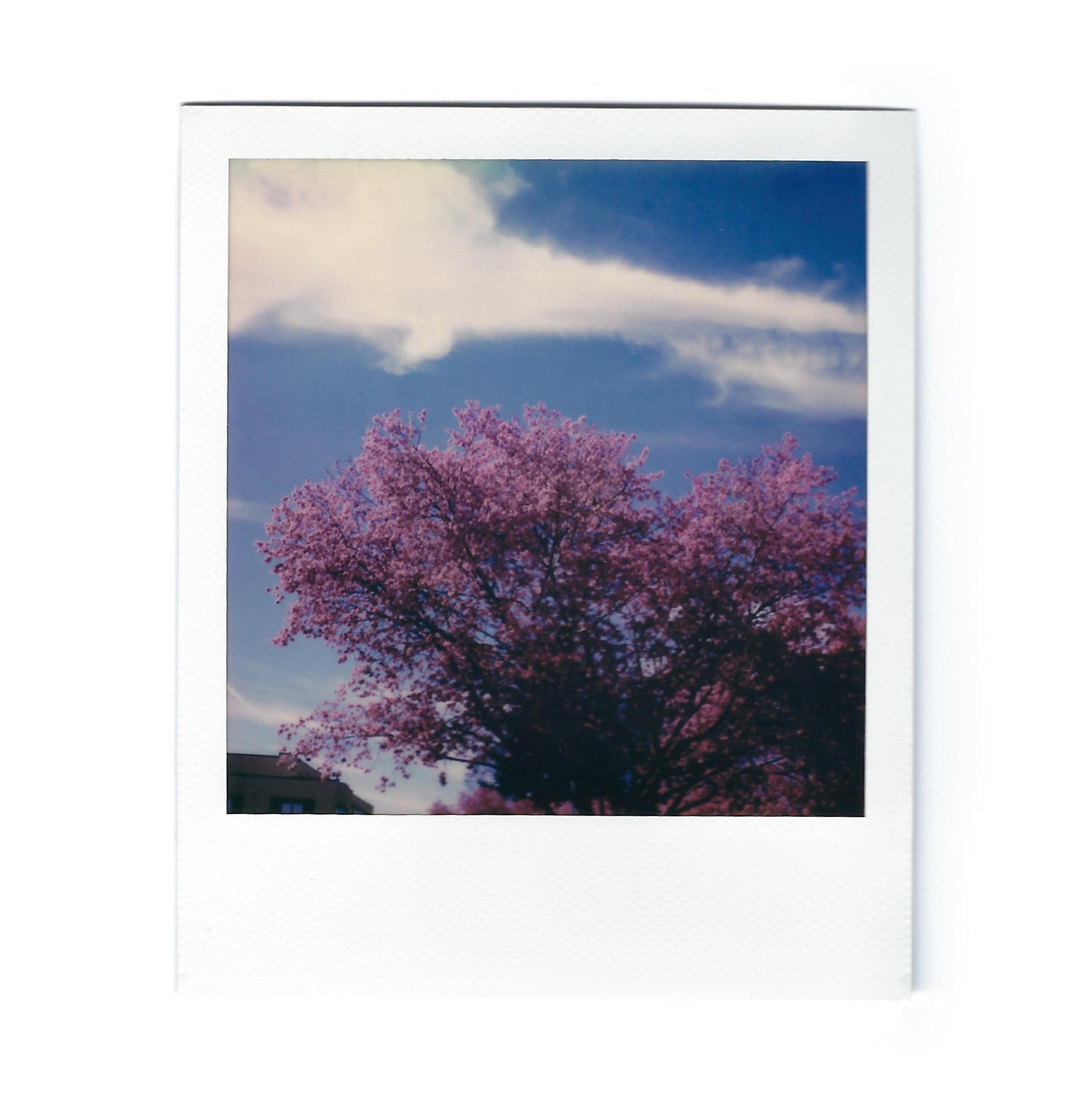 cherry-blossom-polaroid.jpg