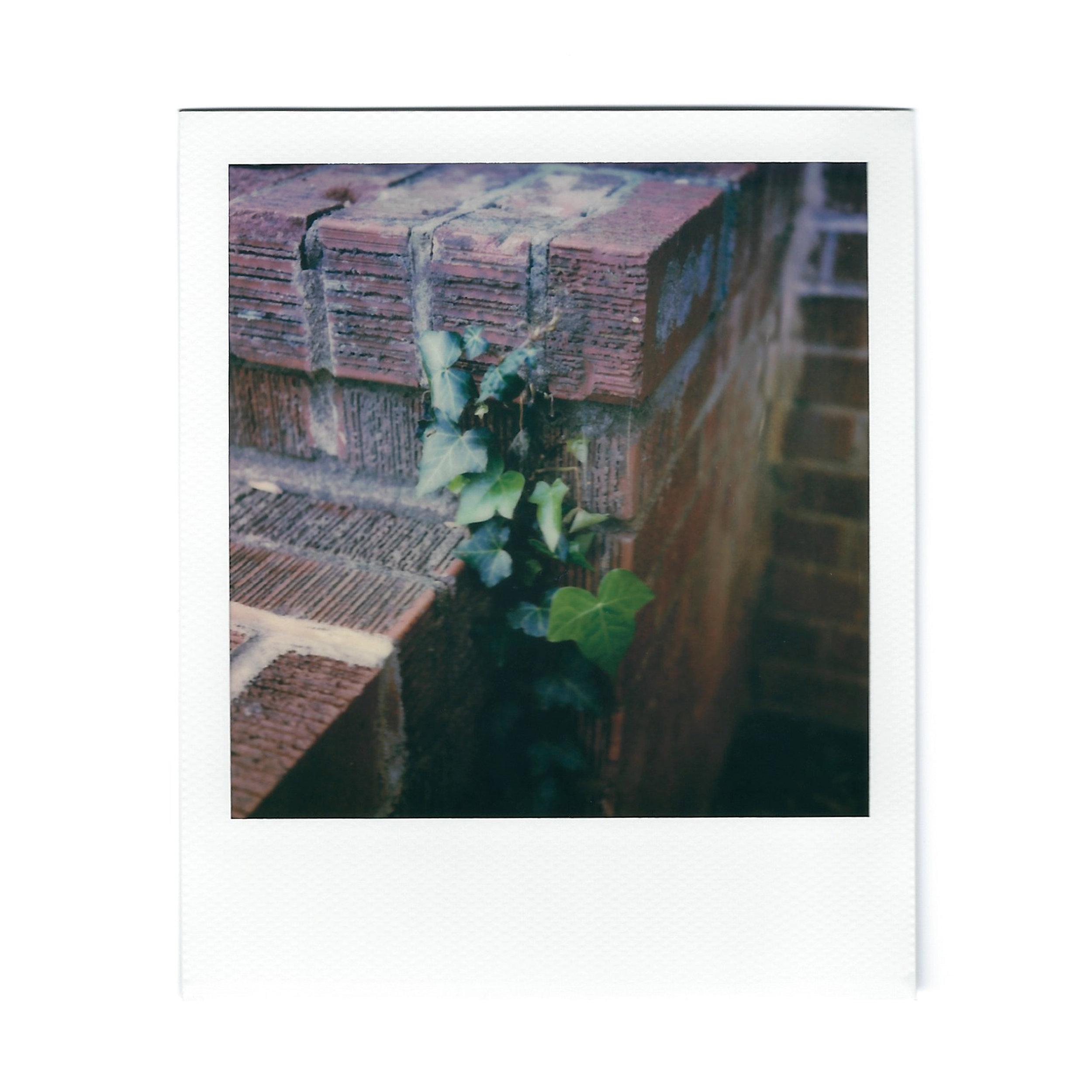 ivy-polaroid.jpg