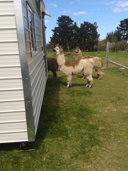 Noesy neighbors.