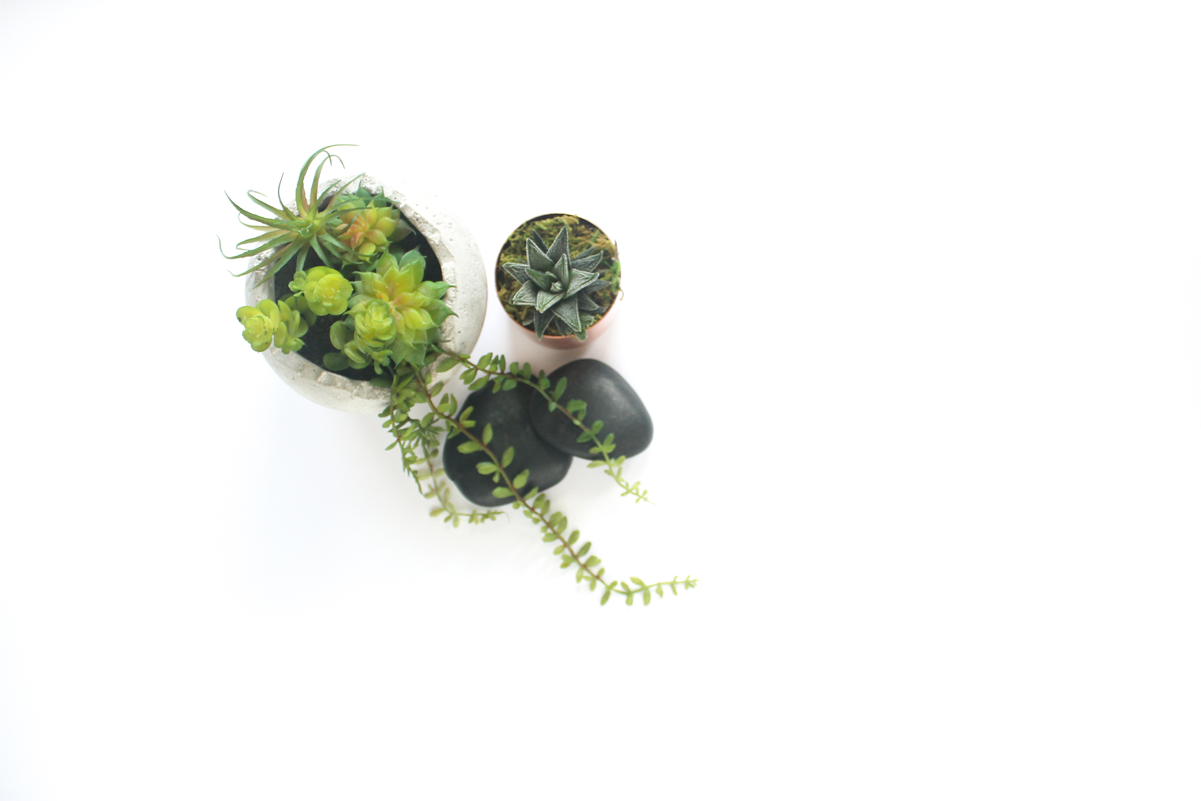 PBD Happy Succulents-4.jpg