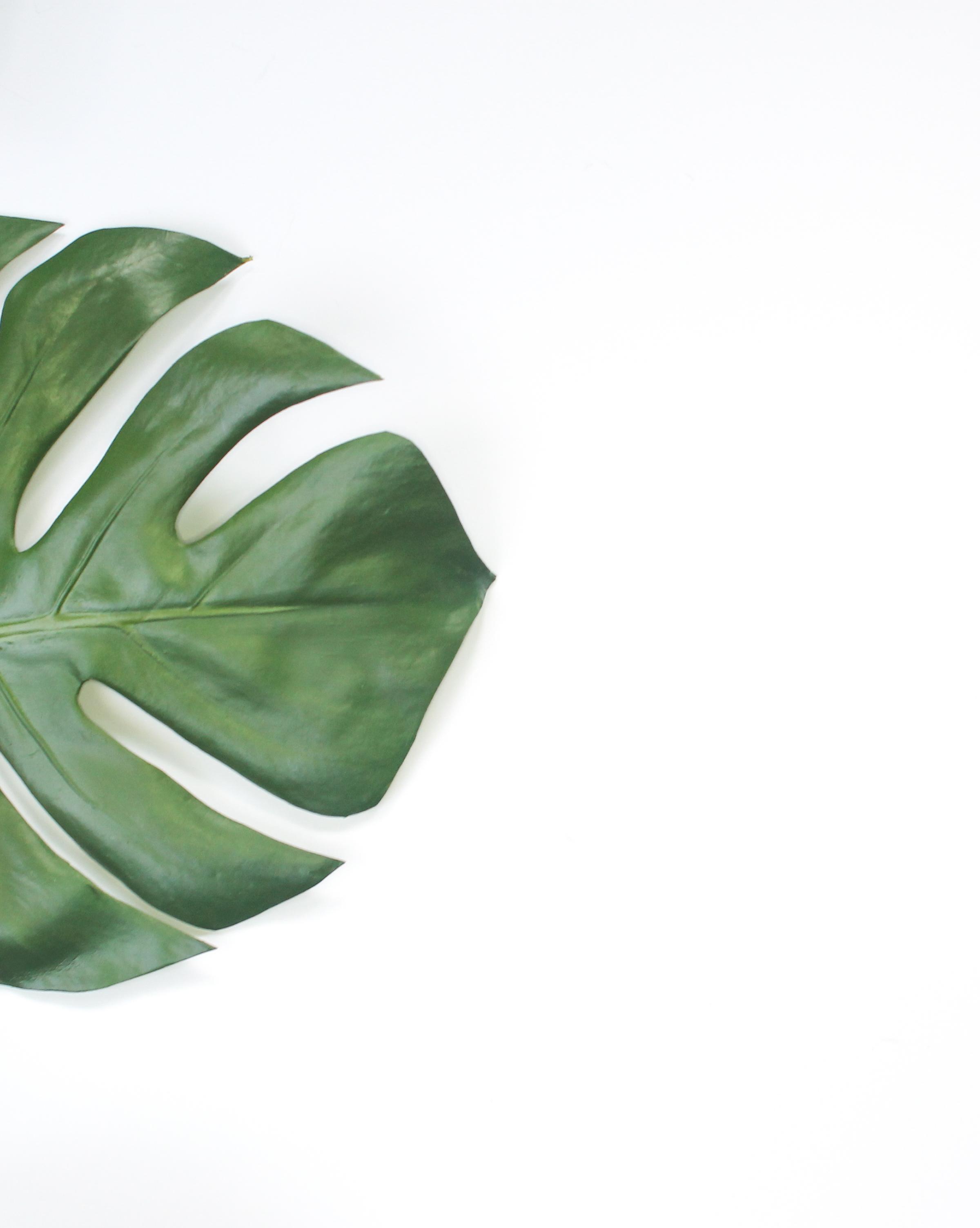 PBD Happy Succulents-3.jpg