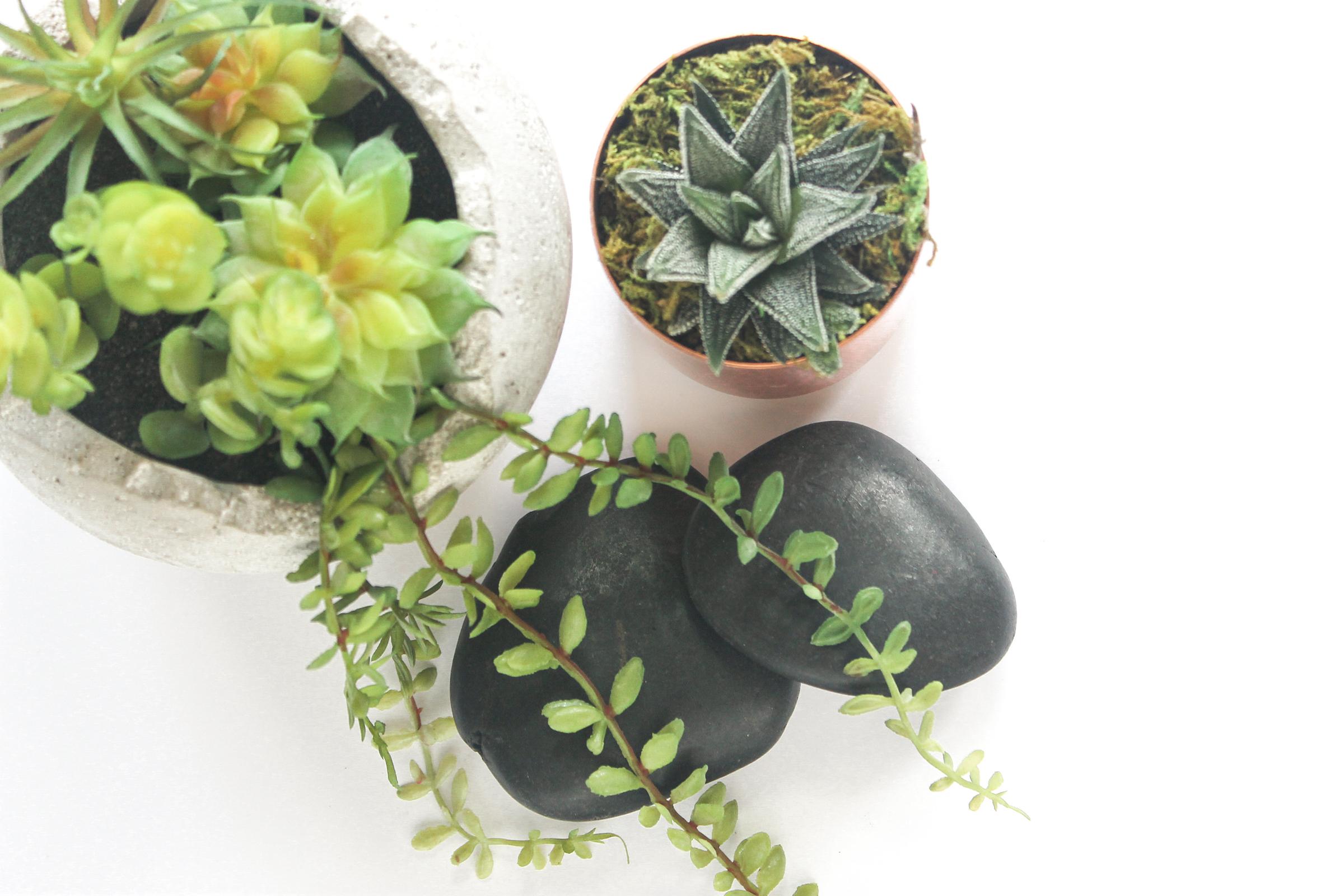 PBD Happy Succulents-5.jpg