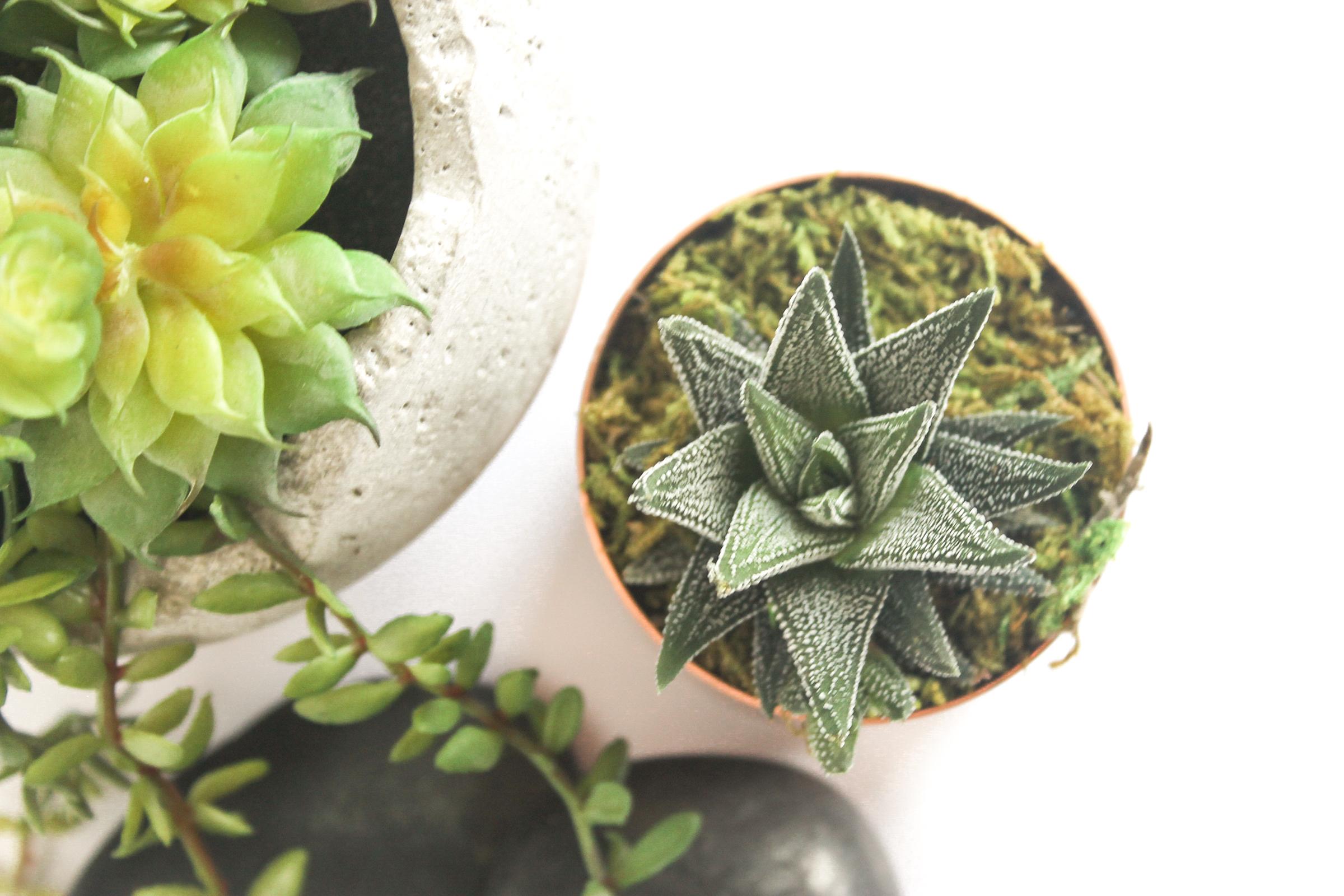 PBD Happy Succulents-6.jpg