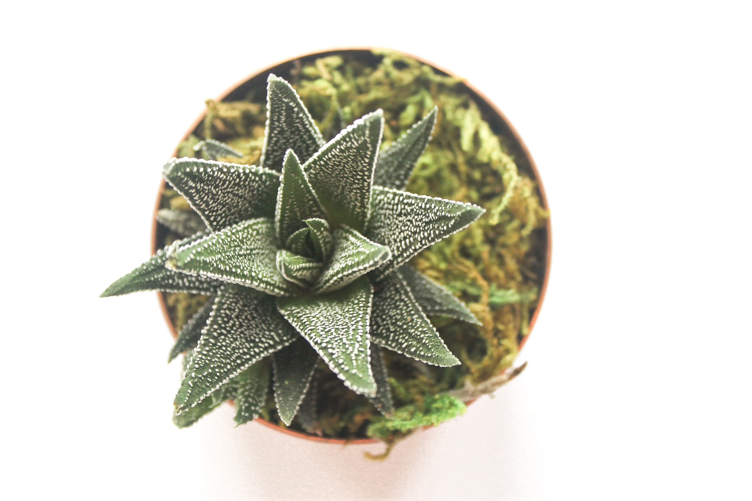 PBD Happy Succulents-7.jpg