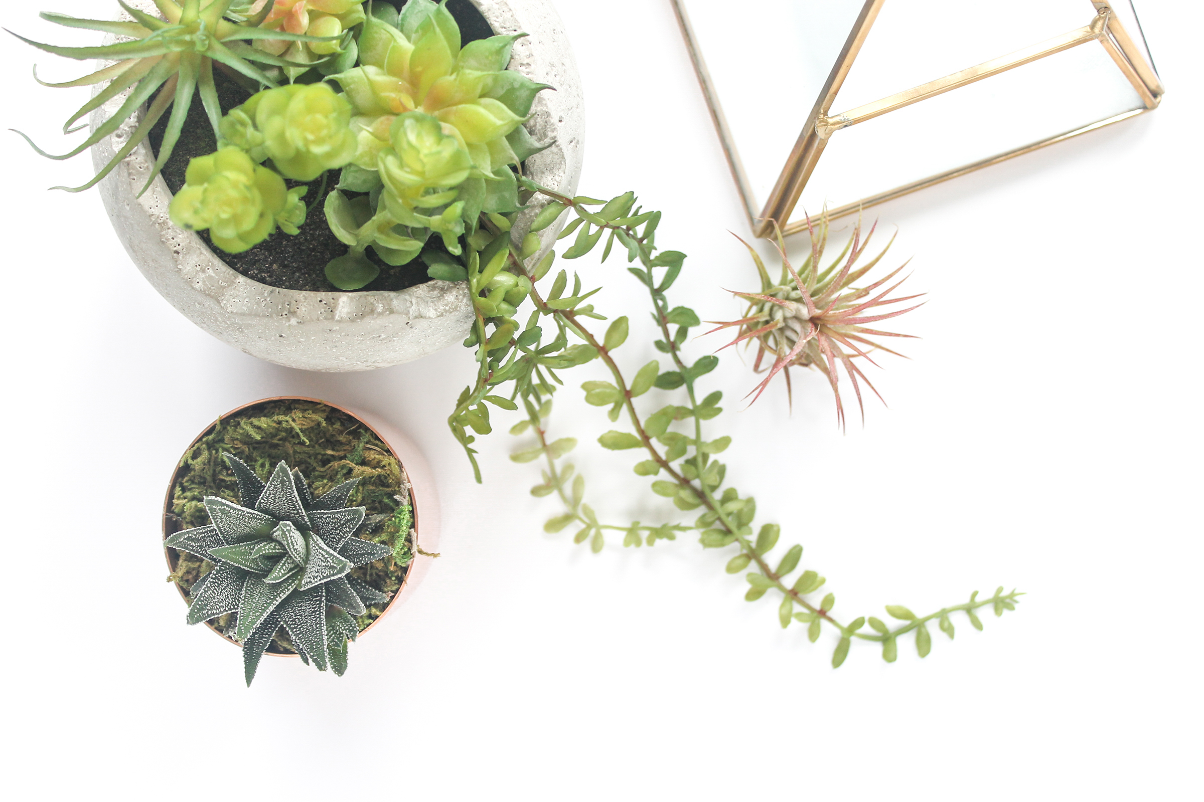 PBD Happy Succulents-9.jpg