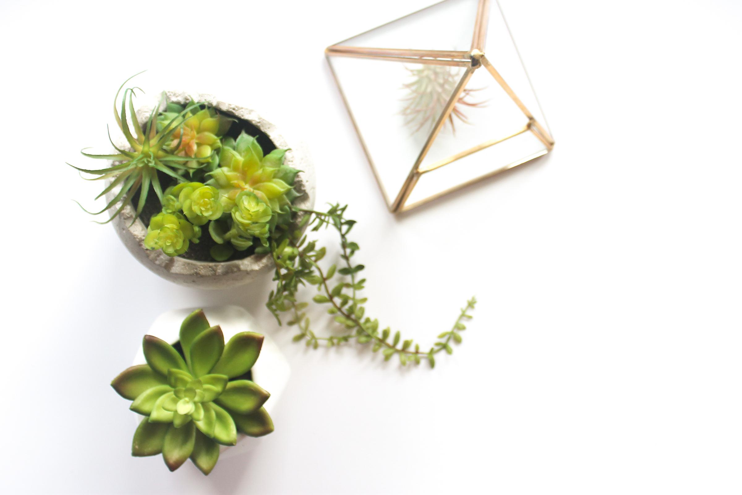 PBD Happy Succulents-10.jpg