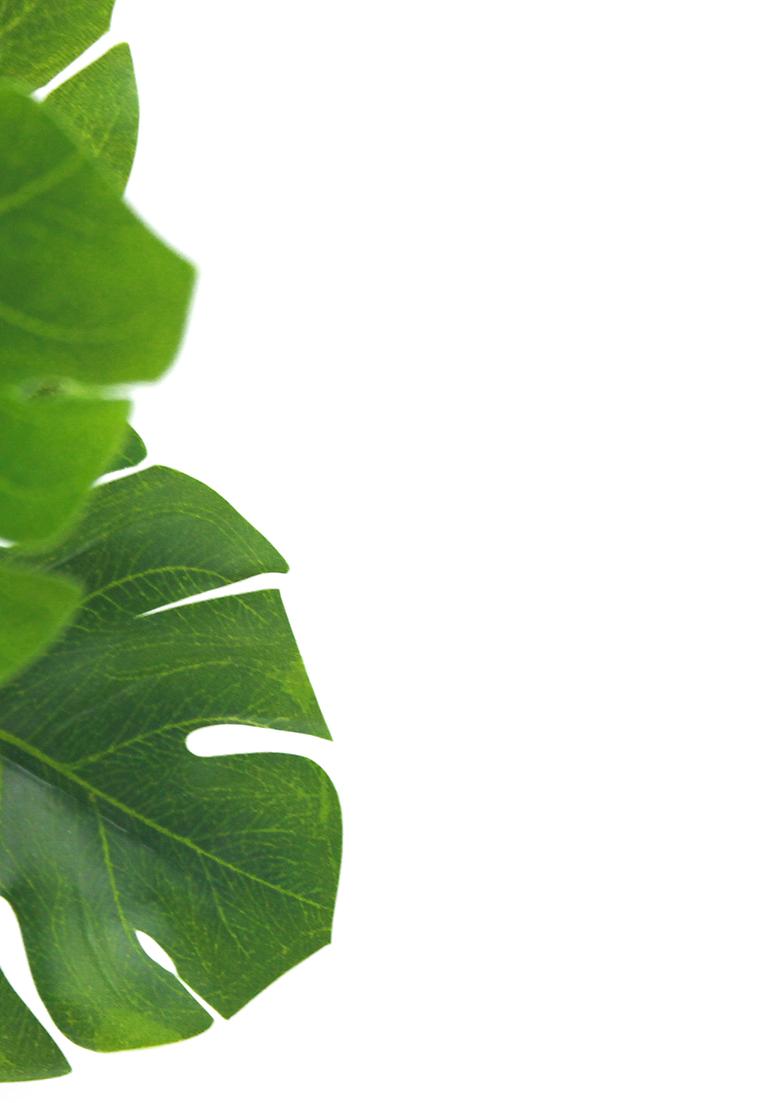 PBD Happy Succulents-16.jpg