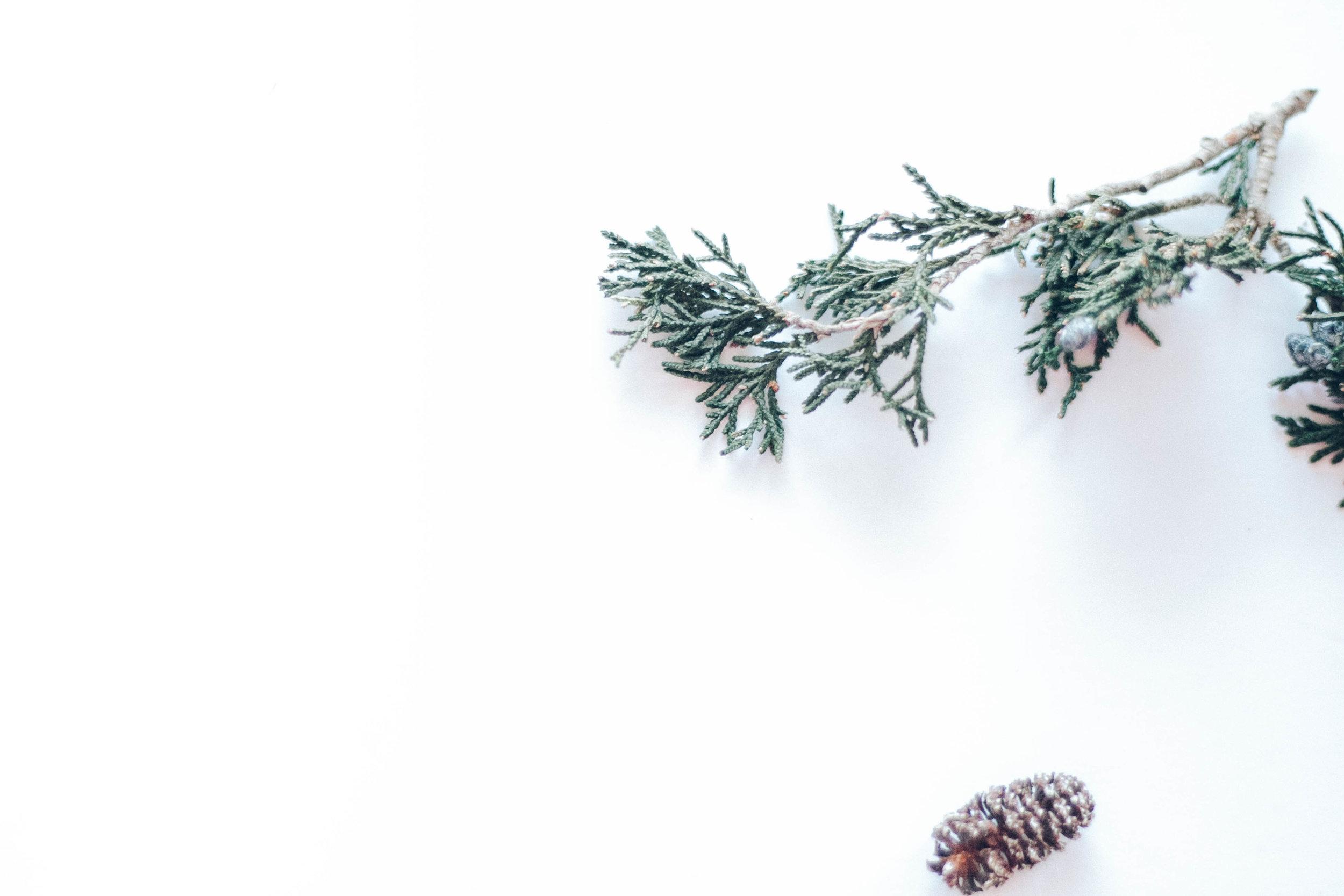 PBD Crisp Winter-3.jpg