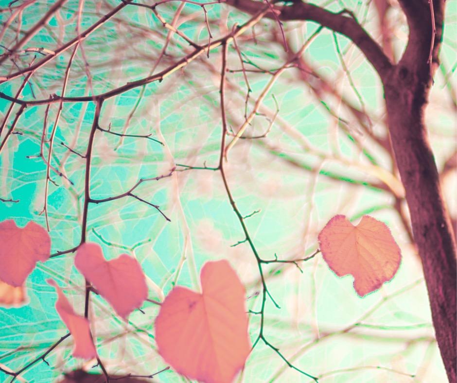 pastel-heartshaped-autumn-leaves