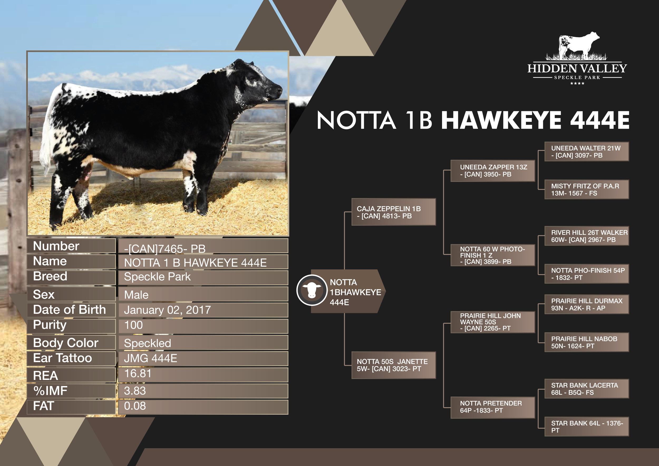 NOTTA_1B_HAWKEYE_444E_flyer01.jpg
