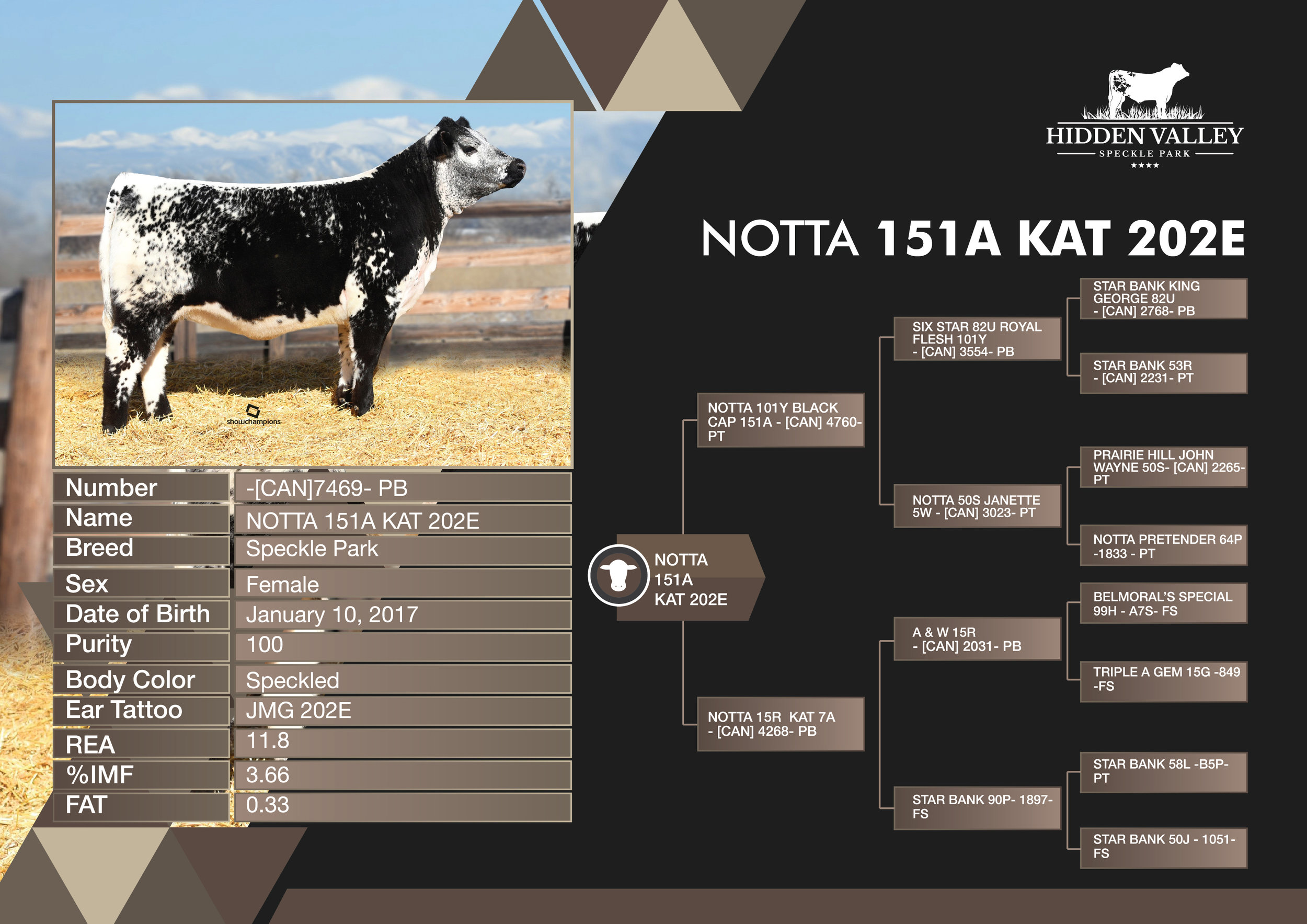 NOTTA_151A_KAT_202E_Flyer01.jpg