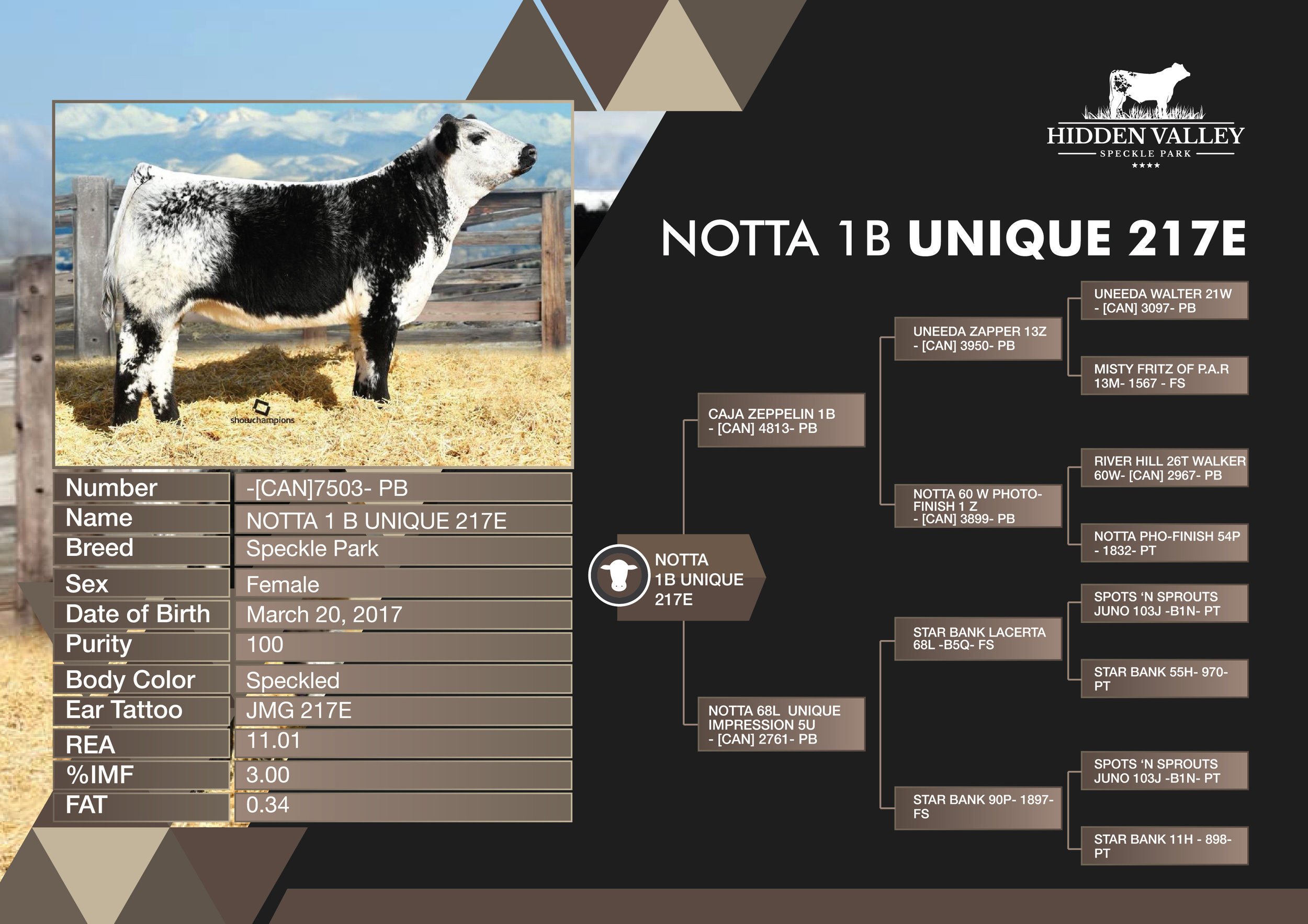 NOTTA_1B_UNIQUE_217E_Flyer01.jpg