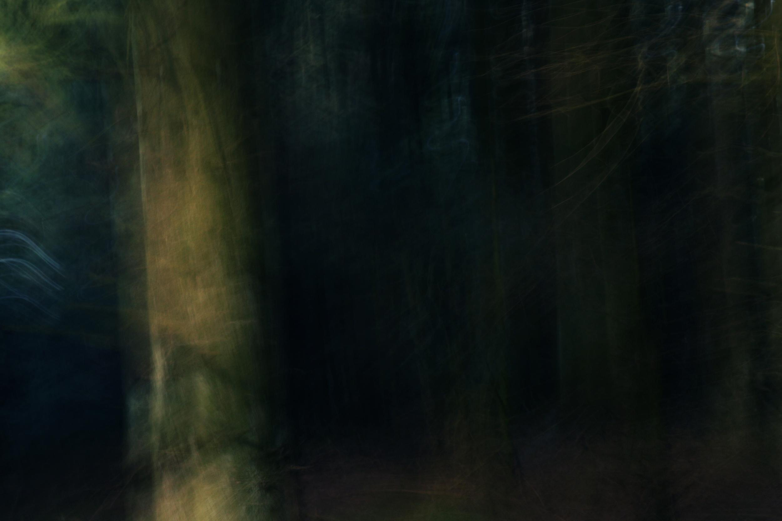 skov4.jpg