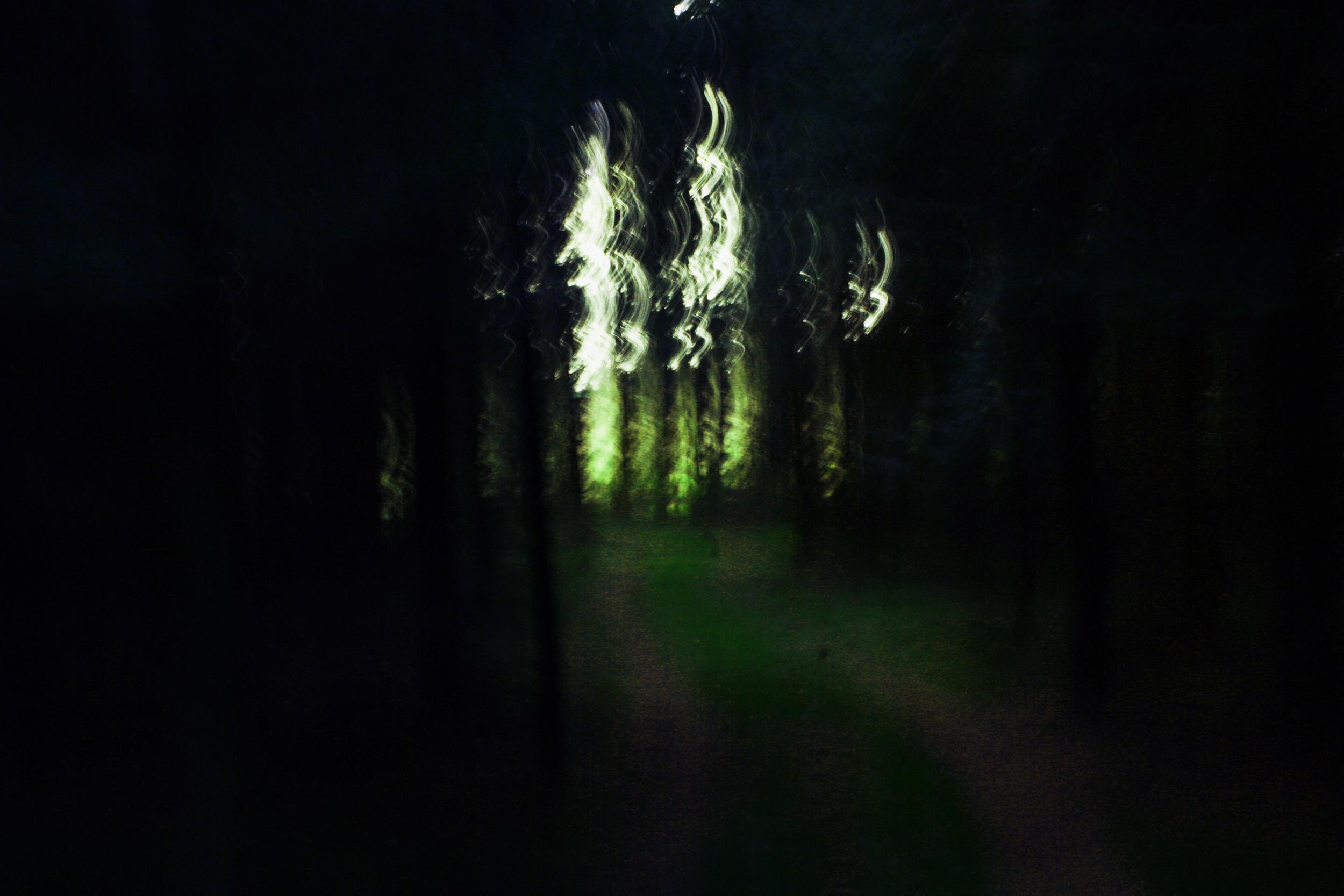 skov9.jpg