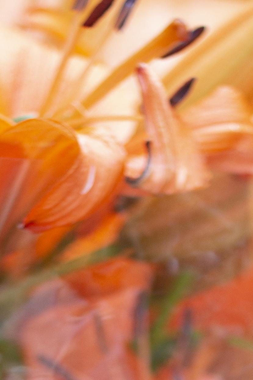 6_blomst_idasuhr.jpg