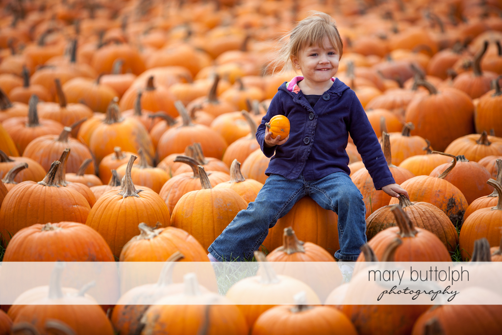 Girl holds a small pumpkin in a sea of pumpkins at Tim's Pumpkin Patch
