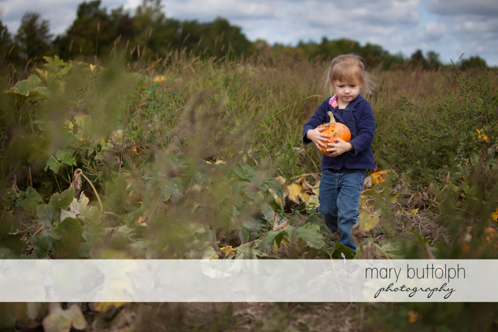 Girl carrying a pumpkin at Tim's Pumpkin Patch