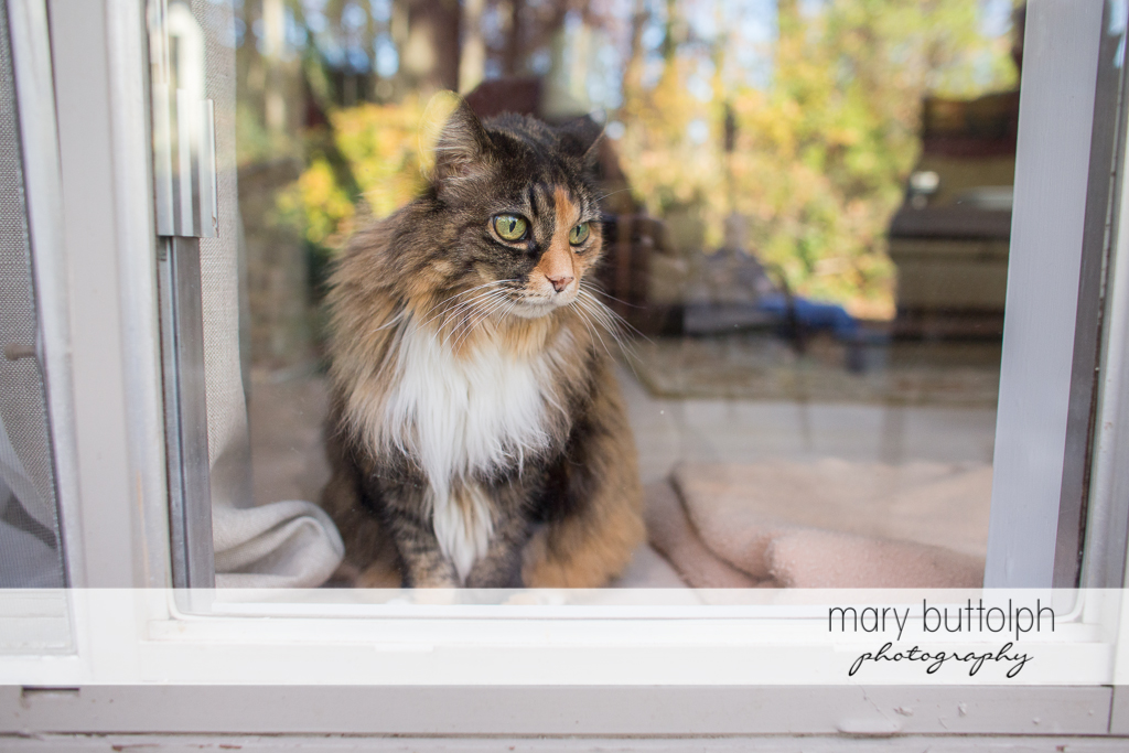 Mary Buttolph Photography © 2012