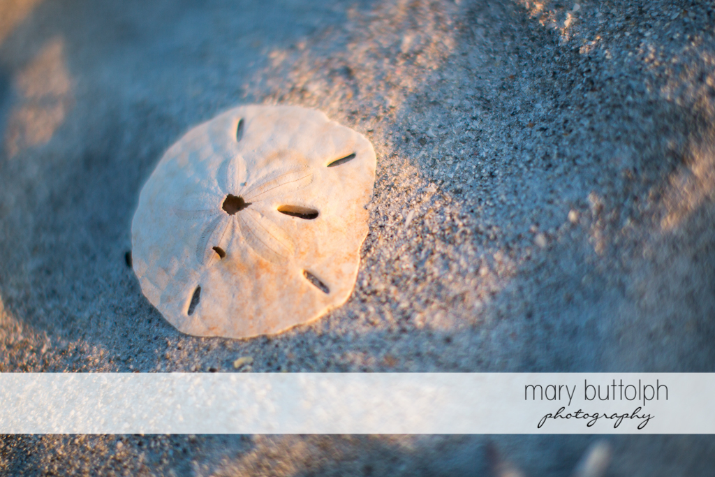 Close up of seashell on the beach at Sanibel Island Vacation