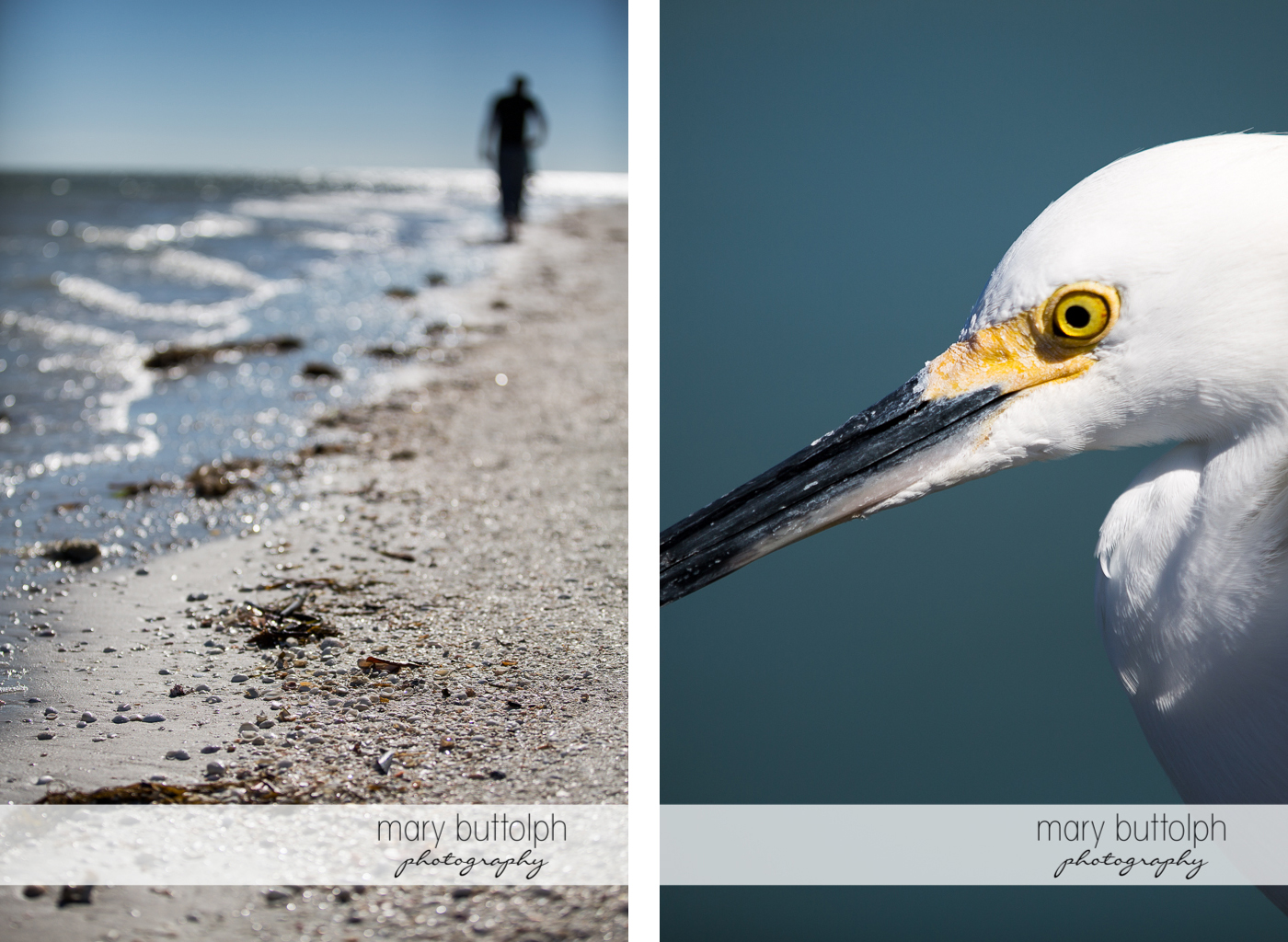 Man leaves footprints in the sand and close up shot of bird at Sanibel Island Vacation
