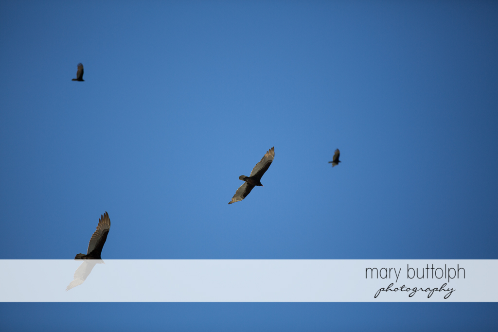 Birds in the sky at Sanibel Island Vacation