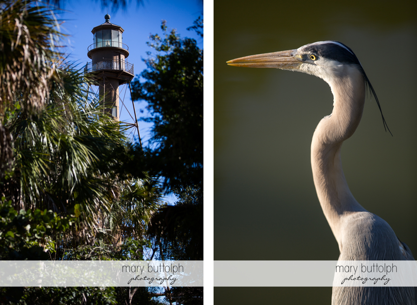 Lighthouse towers above the trees and close up shot of heron at Sanibel Island Vacation