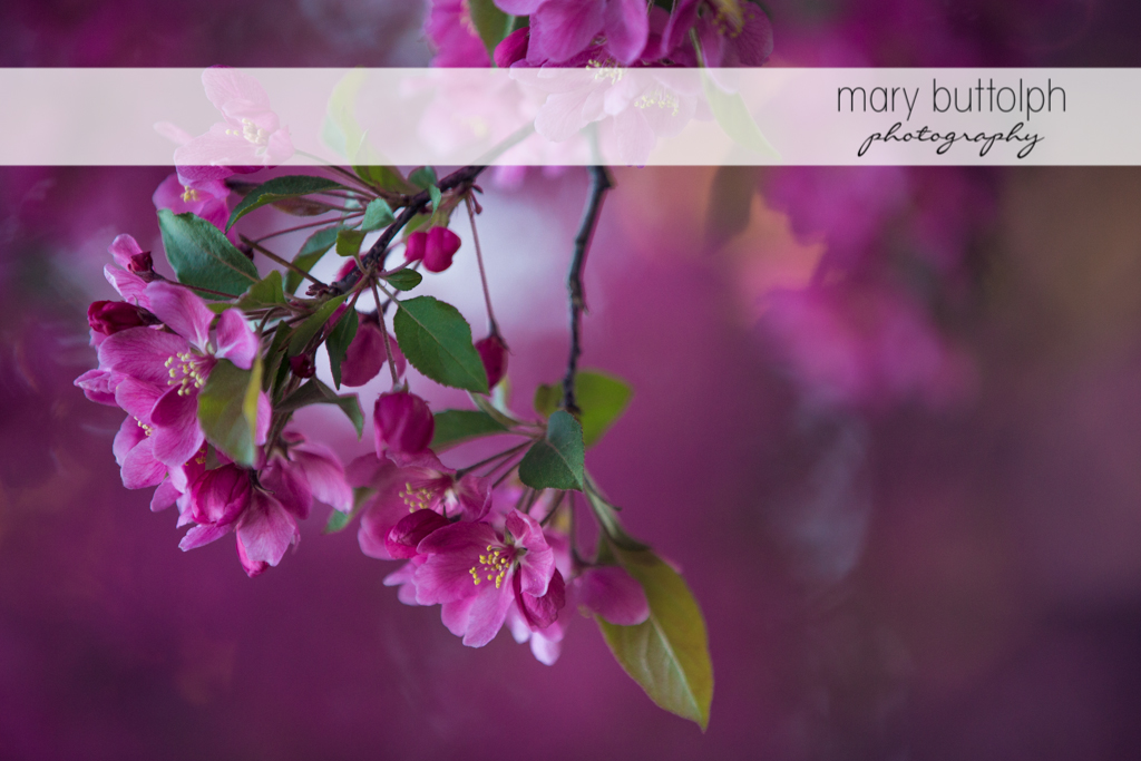 Close up shot of pink flower at Skaneateles Engagement