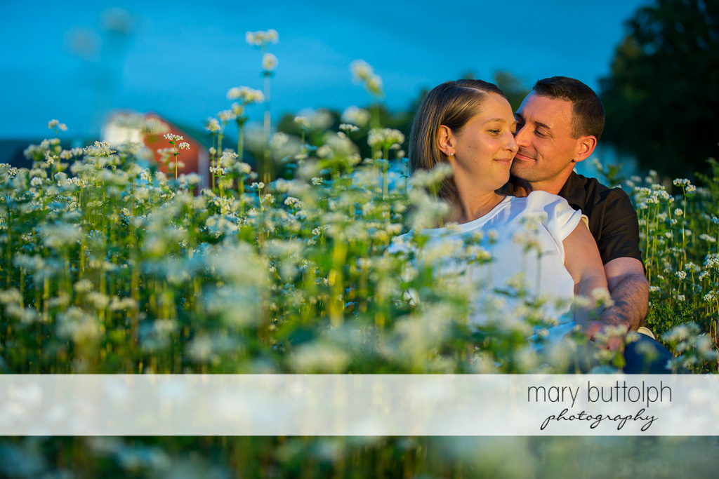 Couple get romantic in a field of flowers at Lockwood Lavender Farm Engagement