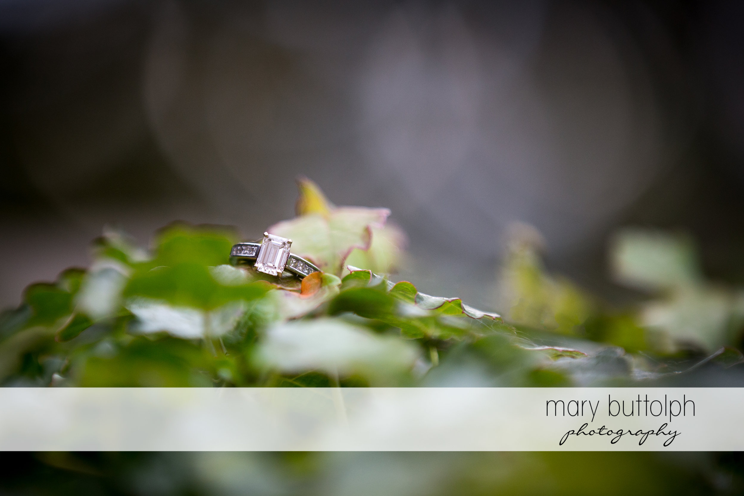 Woman's engagement ring rests on a flower at SUNY Geneseo Engagement