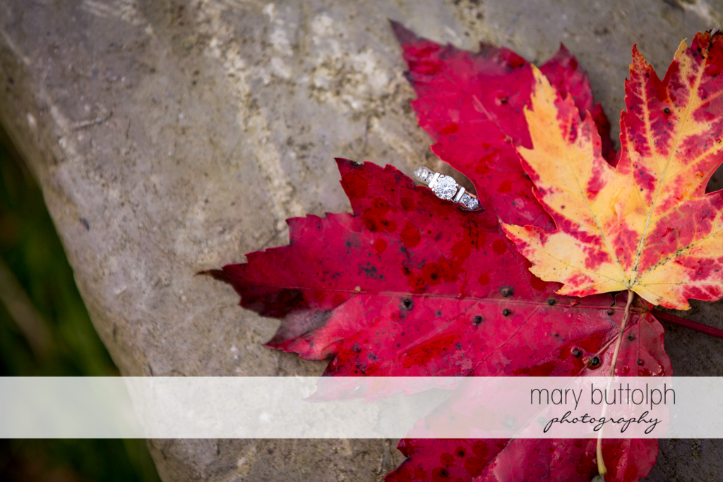 Close up shot of leaf in the woods at Skaneateles Engagement