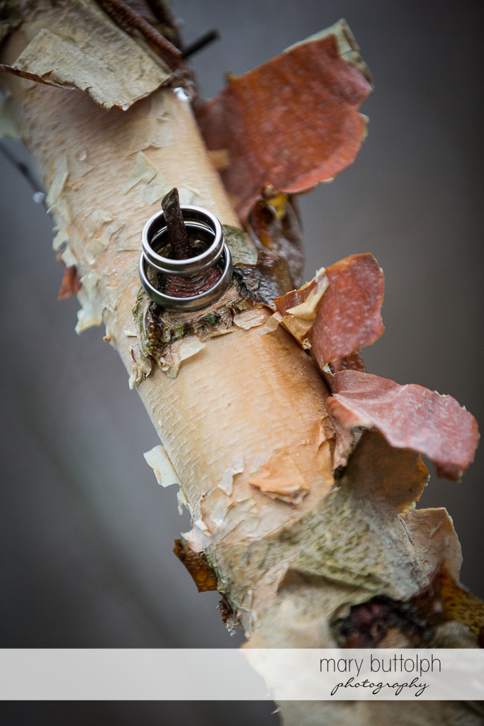 Same sex couple's wedding rings on a tree branch at Arrowhead Lodge Wedding